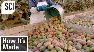 How It's Made: Cactus Pear Puree by Science Channel