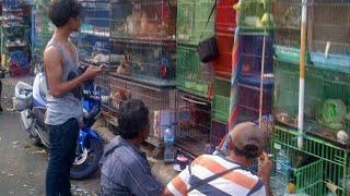 Download Video Pasar Hewan Jatinegara MP3 3GP MP4
