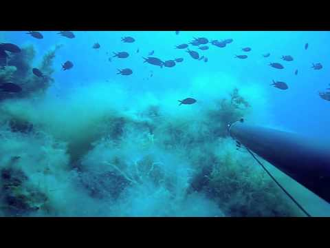 PESCASUB by Matto: dentici (snapper-dentex) enormi, due pesci 19 Kg aspetti profondissimi  #06/2012