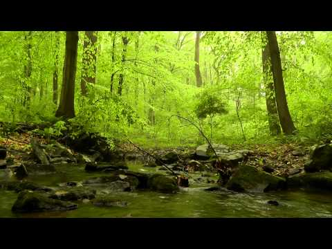 60 minutes of Woodland Ambiance (Nature Sounds Series #4) Trickling Stream & Birds Sounds