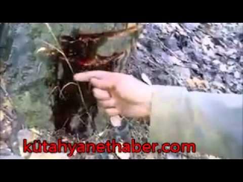 Ağaç kesilirken kan aktı
