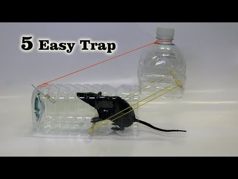 5 Easy Mouse/Rat Trap (видео)