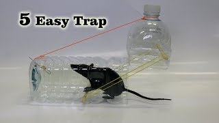Video 5 Easy Mouse/Rat Trap MP3, 3GP, MP4, WEBM, AVI, FLV Januari 2019