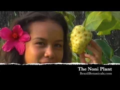 Noni - http://brazilbotanicals.com Noni juice and plant from Polynesia.
