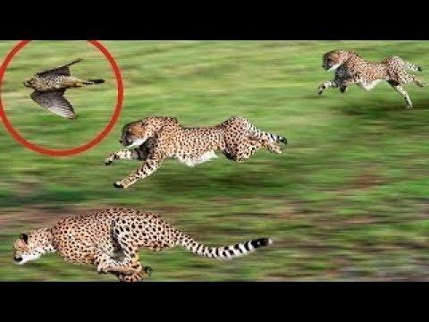 World's Fastest Animals!