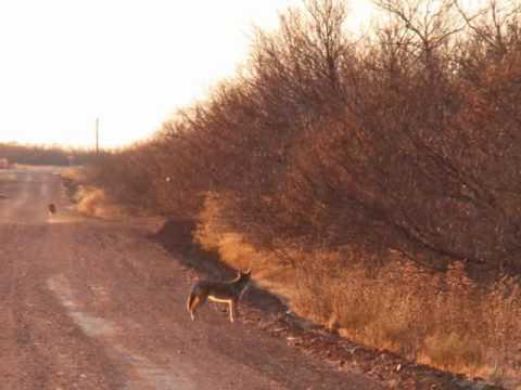240 acres Vernon, TX