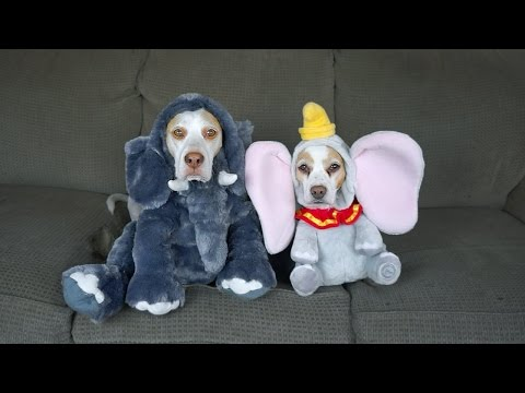 Dog Siblings Show Off Their Many Halloween