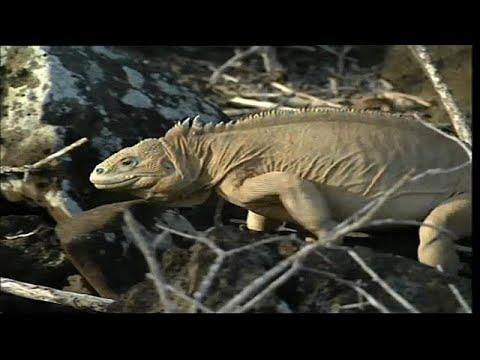 Artenkiller Klimawandel: Bis zur Häfte aller Tier- un ...