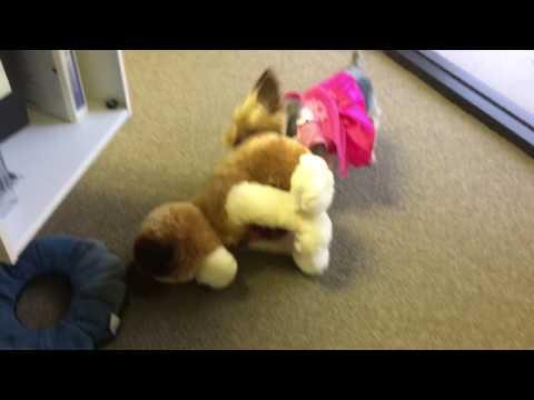 Yorkie takes on stuffed toy dog