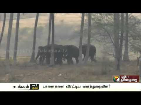 Forest-officials-chase-5-elephants-into-the-forests-near-Hosur