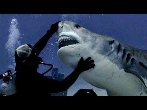 Tanz mit dem Hai