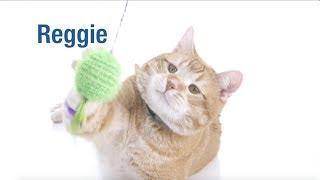 Meet our September Second Chances Calendar Star, Reggie!