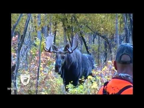Un guide de chasse se fait attaquer par un orignal