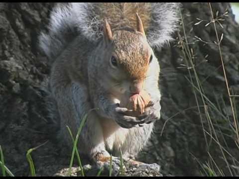 gli-scoiattoli-e-la-globalizzazione