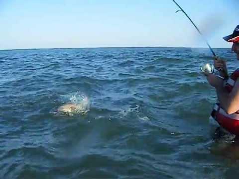 рыбалка на акулу молот видео