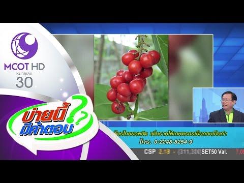 บ่ายนี้มีคำตอบ (27 มี.ค.60) สมุนไพรไทยยอดฮิต เพิ่มรายได้เกษตรกรเป็นกอบเป็นกำ | ช่อง 9 MCOT HD