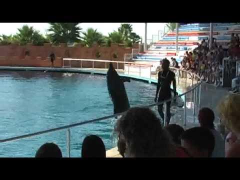 Fókák és delfinek – Templar video –