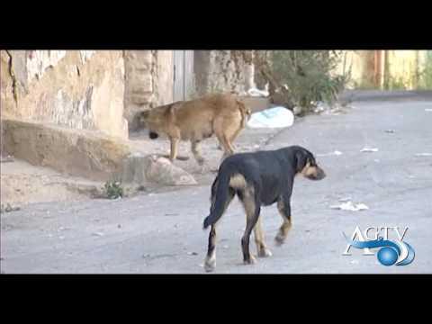 Cani avvelenati ad Agrigento
