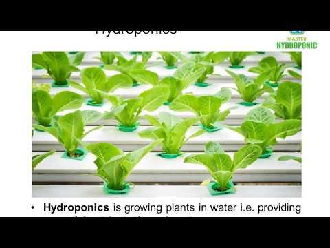 Difference Hydroponics, Aeroponics , Aquaponics