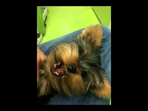 kibbles - http://www.MyPetGarden.com/ - Pasadena Dog Grooming - We make dog grooming fun and enjoyable for your pets in Pasadena. Whether your dog is big or small, nee...