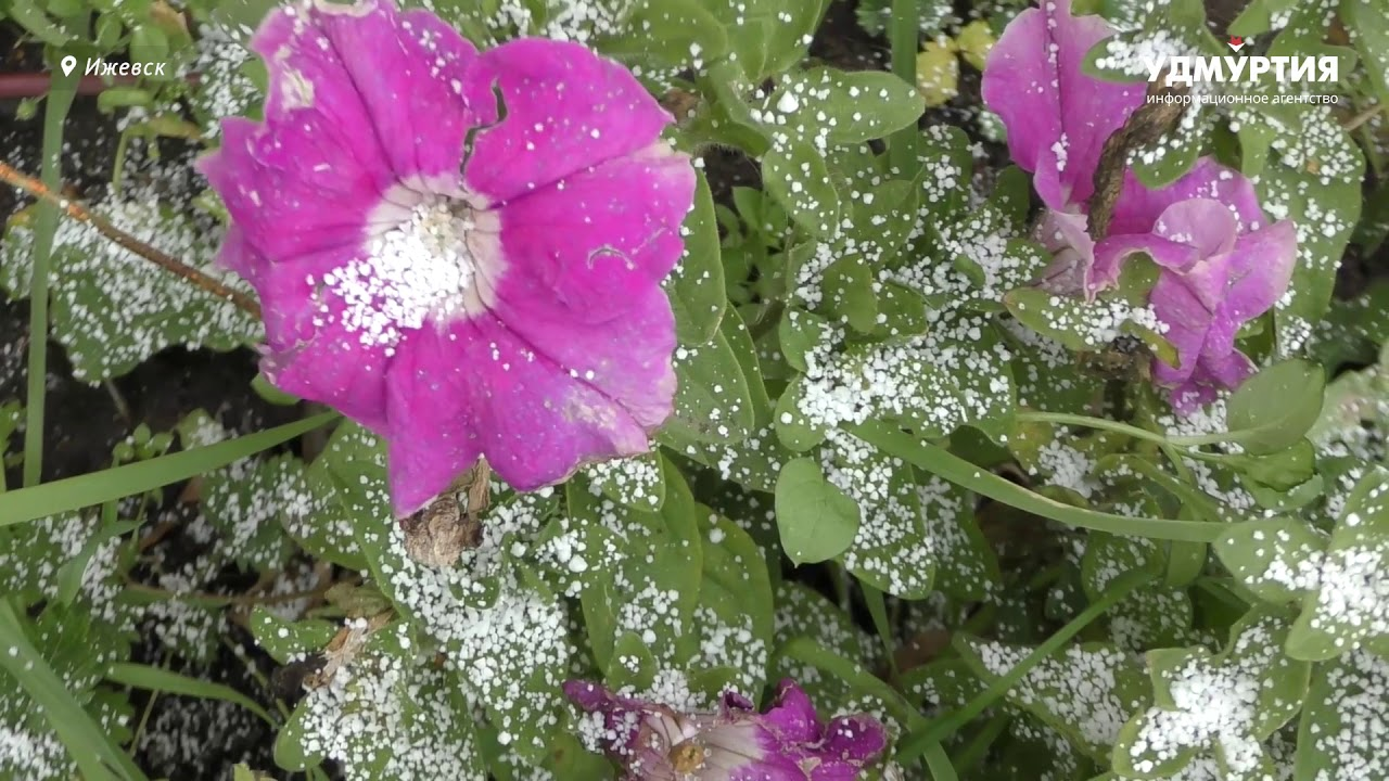 Первый снег в Ижевске