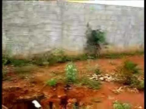 Muriçoca no Buraco do prefeito em Fruta de Leite