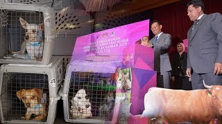 A new law aimed at stopping animal cruelty and promoting responsible pet ownership came into effect on Tuesday.  Those who abuse animals will face a fine of between RM20,000 and RM100,000, a maximum jail term of three years, or both.