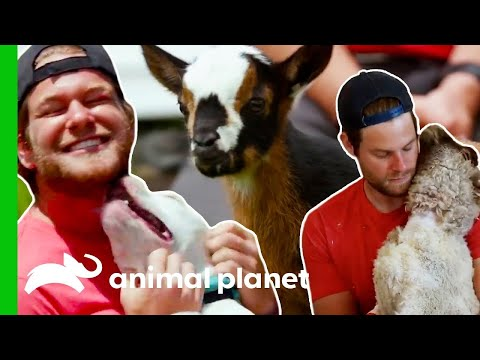 🔴 The Most Heartwarming Animal Moments | Saved By The Barn