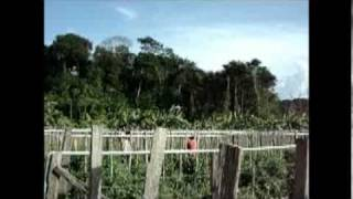 hmong-in-french-guiana-pt-2