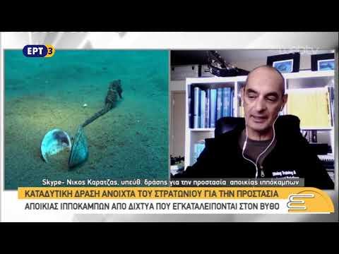 Προστατεύουν αποικία ιππόκαμπων στο Στρατώνι Χαλκιδικής | 1/11/18 | ΕΡΤ