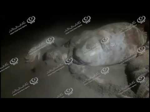 ظهور جثتي رجل وامرأة من المهاجرين على شواطئ مدينة الخمس