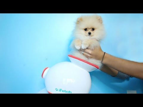 Download Testing Out Weird Dog Gadgets With NEW PUPPY! HD Mp4 3GP Video and MP3