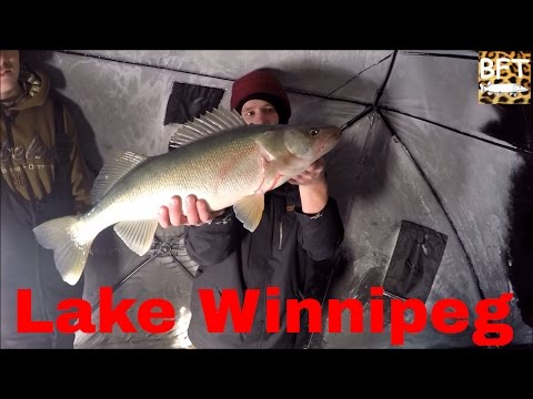 Lake Winnipeg ice fishing Walleye 2015 (2.0)