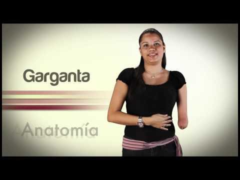 Video Diccionario de LSV Módulo Anatomía Parte 1