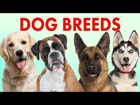 Breeds of Dogs - Part 1 - Learn Different Types of Dogs   Dog Breeds 101 (видео)