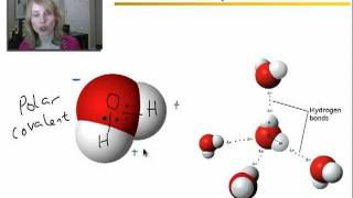 Video Properties of Water, Acids, and Bases - Part 1 MP3, 3GP, MP4, WEBM, AVI, FLV September 2018