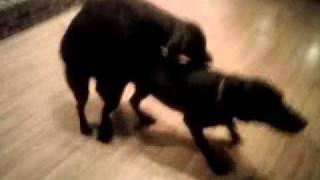 XxX Hot Indian SeX Girl Dog Raping Boy .3gp mp4 Tamil Video
