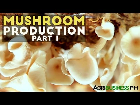 Mushroom Production Part 1 : Mushroom Production in the Philippines | Agribusiness Philippines