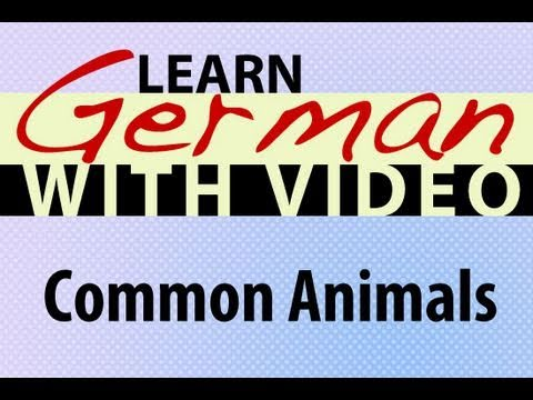 Learn German with Video – Common Animals