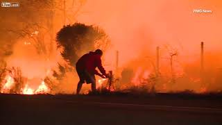 Man saves wild rabbit from the Los Angeles fires