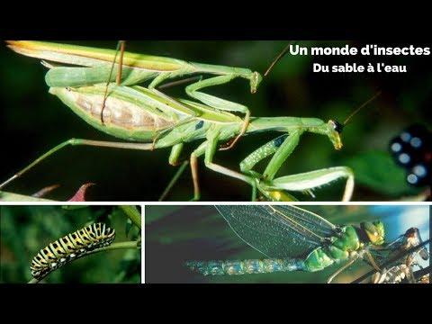 Les insectes - Du sable à l'eau - Un monde d'insectes