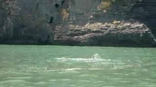 Khanom (Nakhon Si Thammarat) Thailand  city photo : Thailand Dolphins at Khanom, Nakhon Si Thammarat