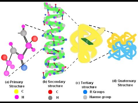 Bioinformatics practical 7 Secondary structure prediction of proteins using SIB