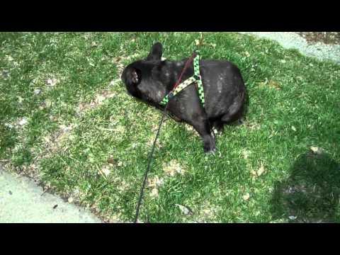 El perro que se asusta de sus pedos