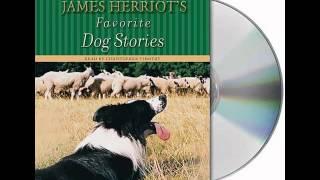 James Herriot's Favorite Dog Stories--Audiobook Excerpt