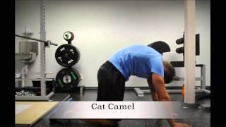 Exercise Index: Cat Camel