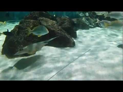 ráják az akváriumban