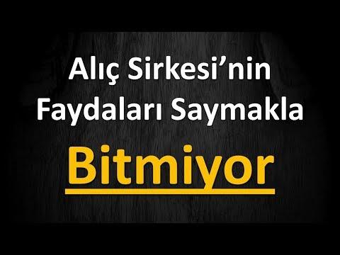 Video Alıç Sirkesi'nin Faydaları Saymakla Bitmiyor download in MP3, 3GP, MP4, WEBM, AVI, FLV January 2017