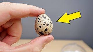 Инкубатор из Китая. Часть 3. Просветил яйца фонариком! Там что-то есть! Овоскопия. alex boyko