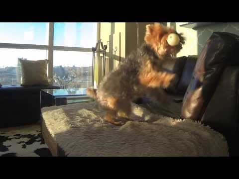 Dog Is Adorably Awful At Playing Catch – In Slow-Mo